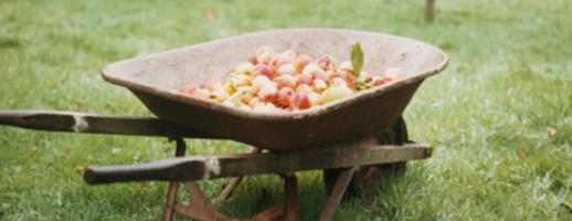 Pratiquer la cueillette la ferme de gally la campagne paris - Ferme de gally yvelines ...