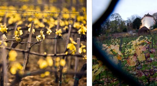 Parcelles du vignoble parisien