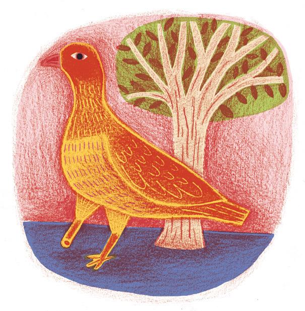 crayon_pigeon