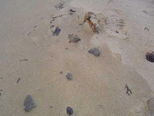 Boulettes de fioul sur la plage de la Coquette à la Guérinière
