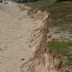 les racines tentent de freiner l'érosion